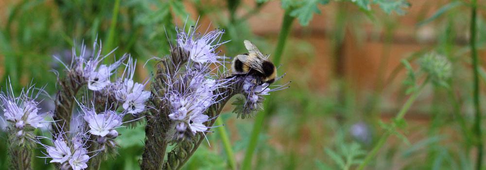 Bee purple flower header